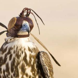 centro-cria-halcon